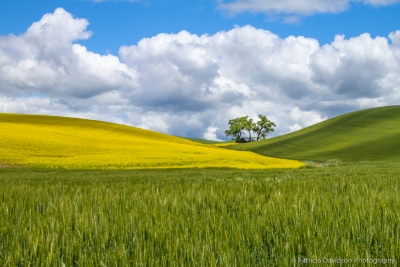 Palouse Hightlights