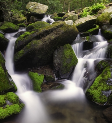 Mountian Stream In Spring