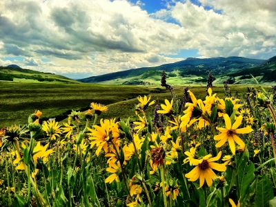 Crested Butte Wild Flowers