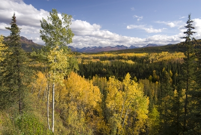 View Of Riley Creek Valley, Denali National Park And Preserve