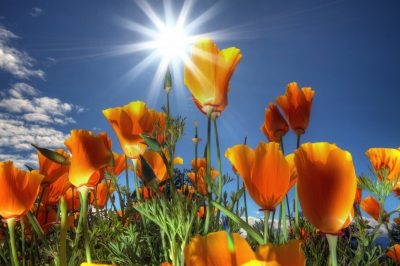Wildflowers In Sunny Day