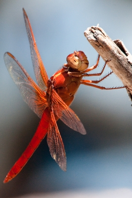 Happy Dragon Fly