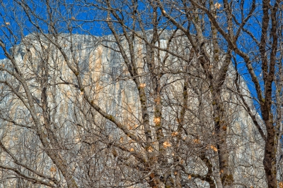 El Capitan Through Trees