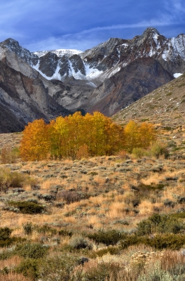 Fall Color In Mcgee Creek