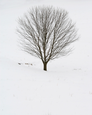 Tree In A White Field