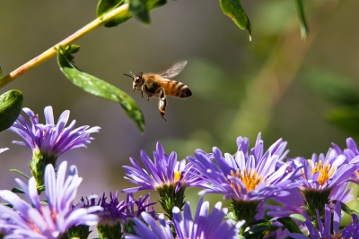 Busy Bee.