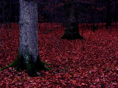 Autumn Forest Flooring