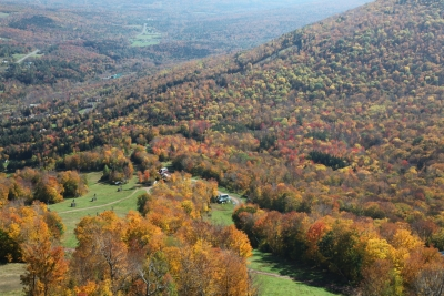 Foliage From High Up