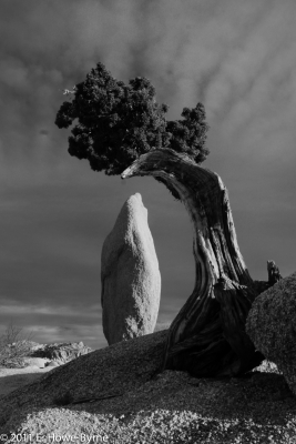 Chicken Tree And Egg Rock