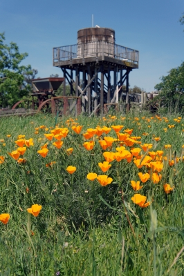 Rush Ranch Poppies
