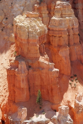 The Pine And The Hoodoos
