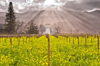 Heavenly Light Upon Napa Valley