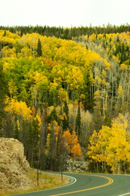 Fall Colors – Colorado (estes Park)