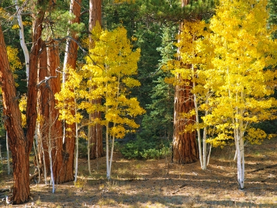 Fall On The Kaibab Plateau