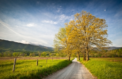 Spring On Hyatt Lane In Cade's Cove – Smoky Mountains