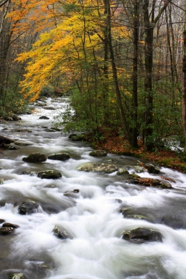 Porter Creek In The Smoky Mountains