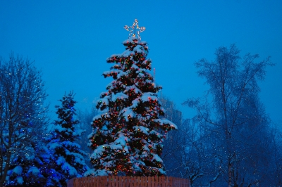 Anchorage's Christmas Tree