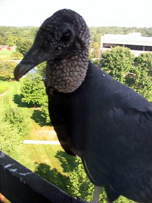 Office Visitor