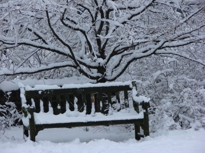 Snow Covered Bench And Wiry Tree