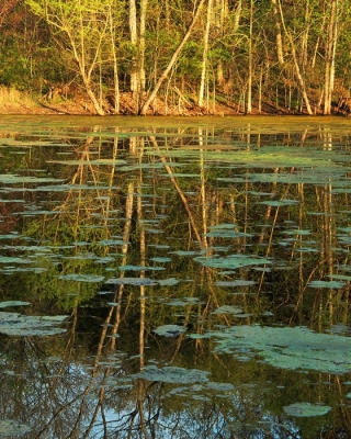 Evening Reflections In A Missouri Pond