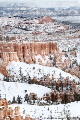 Christmas In Bryce Canyon