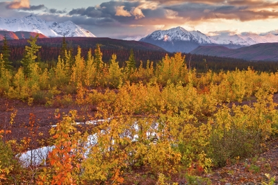 Alaska,park Highway Near Denali, Fall Colors,sunrise, 阿拉斯加, 迪纳利,  秋色, 日出