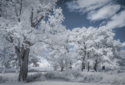 Infrared Nature