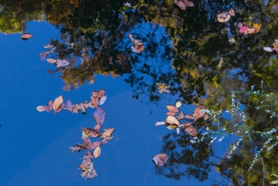Leaves On A Reflection