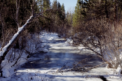 Winter On Burney Creek