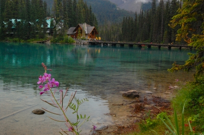 Flower At Emerald Lake