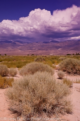 Thunderheads Over Owens Valley