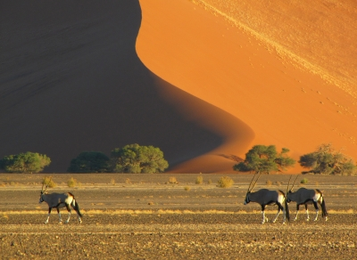 The Symbol Of Namibia