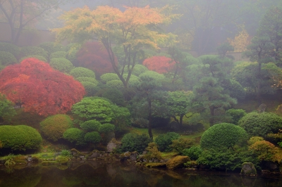 Foggy Autumn Morning At The Portland Japanese Garden