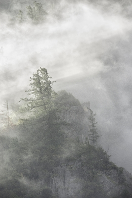 Snow Storm, South Rim, Yosemite
