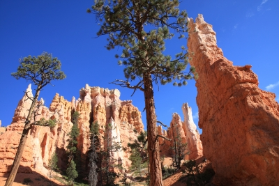 Towering Trees And Sandstone Spires