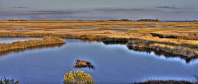 From Marsh To Sea