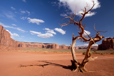 Dead Tree – Monument Valley