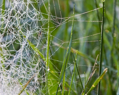 Web In The Grass