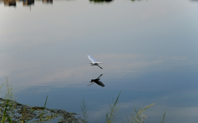 A White Bird Beneath The Water