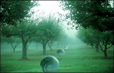 Morning Orchard