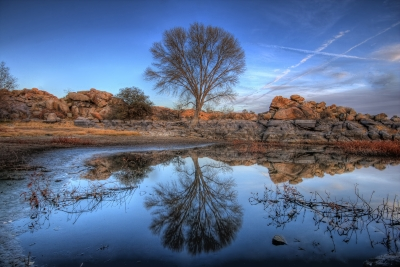 Rock Wall Tree Reflect