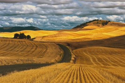 Wheat Fields Palouse, Washington