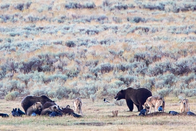 Yellowstone Dinner Party
