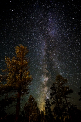 Milky Way And The Tall Pines