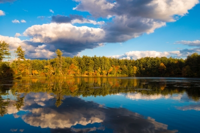 Fall Foliage With Clouds