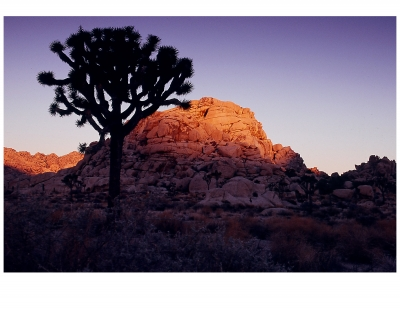 First Light In Joshua Tree National Park
