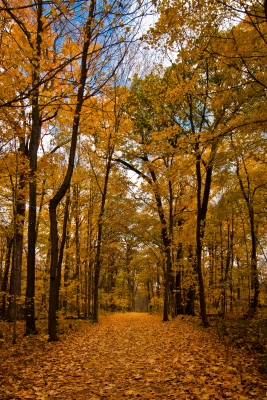 Follow The Yellow Leaf Road…