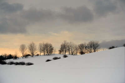 A Snowy Pasture With A Line Of Trees Standing Against The Evening Sky