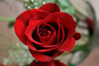 Romantically Red