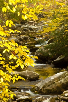 White-water Stream In Fall Season